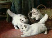 Curtains Framed Prints - Three White Angora Kittens Framed Print by Arthur Heyer