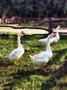 Three White Geese Print by Susan Savad