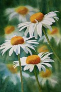 White Flower Paintings - Three Wild Daisies by Sharon Freeman