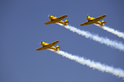 Smoke Trails Prints - Three Yellow Harvards Flying In Unison Print by Pete Ryan