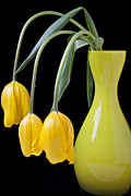 Floral Metal Prints - Three yellow tulips Metal Print by Garry Gay