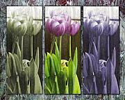 Tulips Digital Art Originals - Threelips by Tom Romeo