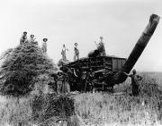 1900s Prints - THRESHING, c1905 Print by Granger