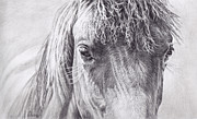 Wild Horse Drawings - Through a Horses Eyes by Diane Bay