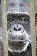Ape Photo Originals - Through My Eyes by Ian Mcadie