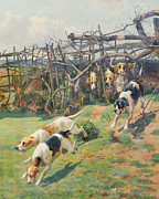 Beagle Framed Prints - Through the Fence Framed Print by Arthur Charles Dodd