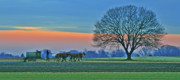 Amish Framed Prints - Through The Fields Framed Print by Scott Mahon