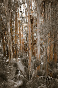 Palmetto Trees Prints - Through the Forest Trees Print by Carolyn Marshall