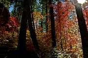 Fall Colors - Through the Light  by Katherine Halstead