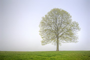 Tree Leaf Photo Prints - Through The Mist Print by Scott Norris