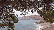 Dubrovnik Photos - Through the Trees in Dubrovnik 2 by Madeline Ellis