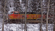Bnsf Framed Prints - Through the Woods Framed Print by Albert Seger