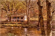 Creek Greeting Cards Prints - Through the Woods Print by Debra and Dave Vanderlaan