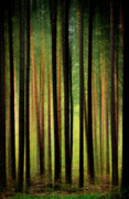 Foggy Digital Art Posters - Through the Woods Poster by Svetlana Sewell