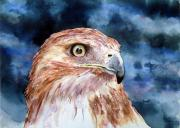 Hawk Painting Framed Prints - Thunder Framed Print by Sam Sidders
