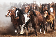Western Art Photos - Thundering Hooves by Heather Swan