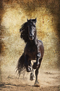 Forelock Photo Posters - Thundering Stallion D6574 Poster by Wes and Dotty Weber