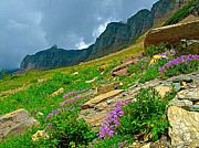 Montana Digital Art - Thunderstorm approaching Davidsons Penstemon on Highline Trail by Ruth Hager