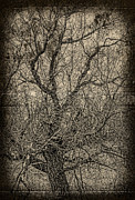 Tickle Of Branches  Print by Jerry Cordeiro