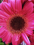 Flower Design Photos - Tickled Pink by Donna Blackhall