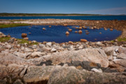 Wild And Scenic Prints - Tidal Pool Print by Susan Cole Kelly