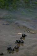 Tannis  Baldwin - Tidal pool