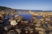 Rocks. Tidal Pool Posters - Tidal Pools Fill The Rocky Foreshore Poster by Jason Edwards
