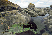 Rocks. Tidal Pool Posters - Tide Pool Poster by Peter Scoones