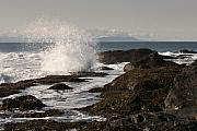 Juan De Fuca Posters - Tide Pool Wave Poster by Chad Davis