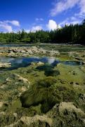 Tidal Pool Photos - Tide Pools, Botanical Beach, Vancouver by John Sylvester