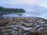 Juan De Fuca Provincial Park Prints - Tide Pools Exposed At Low Tide Print by Tim Fitzharris