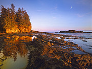 Juan De Fuca Provincial Park Posters - Tidepools Exposed At Low Tide Botanical Poster by Tim Fitzharris