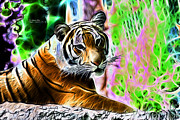 Tiger Fractal Framed Prints - Tiger 3519 - F - S Framed Print by James Ahn