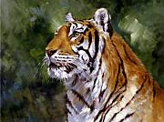 Beautiful Day Framed Prints - Tiger Alert Framed Print by Silvia  Duran