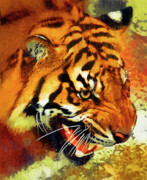 Growling Painting Prints - Tiger at Waterhole Print by Clarence Alford