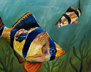 Fish Underwater Paintings - Tiger Barbs by Anthony Cavins