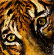 Animals Pastels Prints - Tiger by Rashmi Rao Print by Rashmi Rao