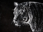 Grayscale Drawings - Tiger by Callie Fink