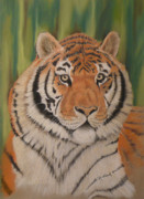 Endangered Pastels Prints - Tiger Print by Charles Hubbard