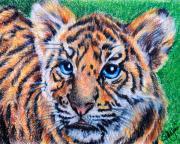 Tiger Cub Print by Jai Johnson