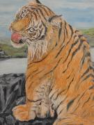 Tiger Cub Print by Rajesh Chopra