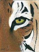 Large Eye Framed Prints - Tiger Framed Print by Dani Moore