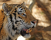 Photograph Of Cat Framed Prints - Tiger DE Framed Print by Ernie Echols
