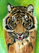 Stripes Pastels - Tiger by Dorothy  Oakman