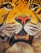 Big Cat Pastels Posters - Tiger Eyes Poster by Carol Grimes