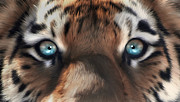 Julie L Hoddinott - Tiger Eyes