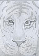 The Tiger Drawings - Tiger Eyes by Justin Murdock