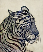 Photomanipulation Drawings Prints - Tiger I Print by Debbie Portwood