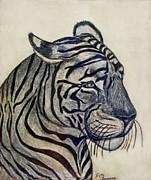 Tiger I Print by Debbie Portwood
