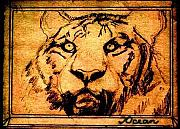 Sepia Ink Drawings - Tiger in Golden Tones and Sepia by Ocean
